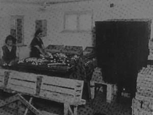 Eine alte Kennzeichnungsstelle für Eier